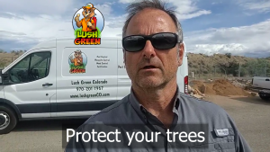 Protect your trees