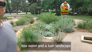 Using the right plant materials can dramatically reduce water usage