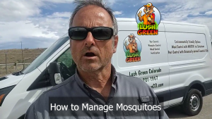 How To Manage Mosquitoes