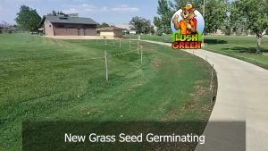Fall is a great time for seeding grass